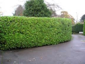 Definition Topiary - maine architecture elements of ne style hedges
