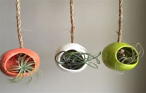 care   lovely air plants  adorn  home