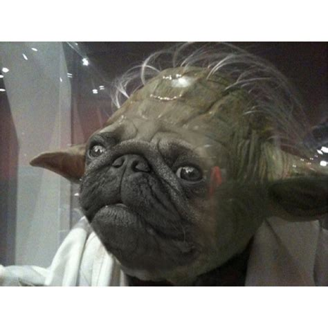 pug dressed up as yoda pugs in costumes yoda