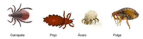 imagenes de vectores transmisores de enfermedades principales vectores de pat 243 genos y par 225 sitos del hombre