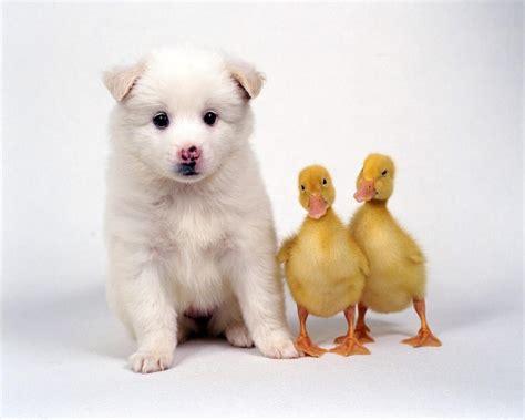 cute friends domestic animals wallpaper  fanpop