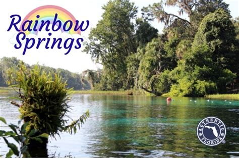visit  remarkable rainbow springs south florida reporter
