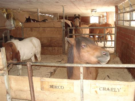 pony stall ponystall 6 jpg