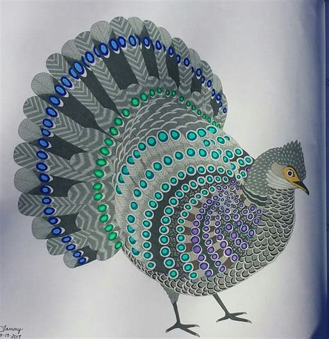 millie marottas beautiful birds 11 best beautiful birds millie marotta images on beautiful birds coloring books and