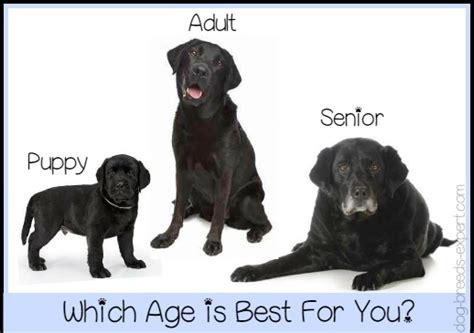 what age to puppy puppy or age considerations when choosing a