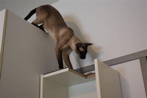cat climbing shelf in one compact billy ikea hackers