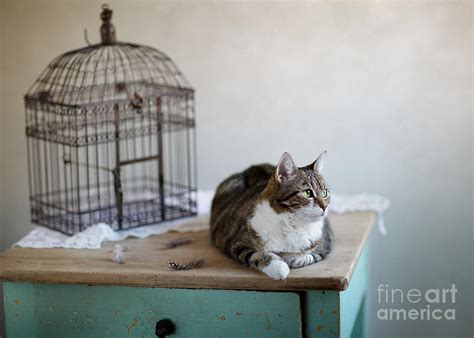 Birdcage Home Decor by Cat And Bird Cage Photograph By Nailia Schwarz