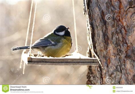 birds feeding in winter stock photo image 50523528