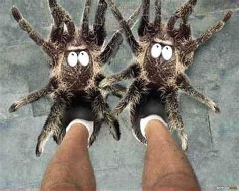 spider slippers spider slippers imghumour