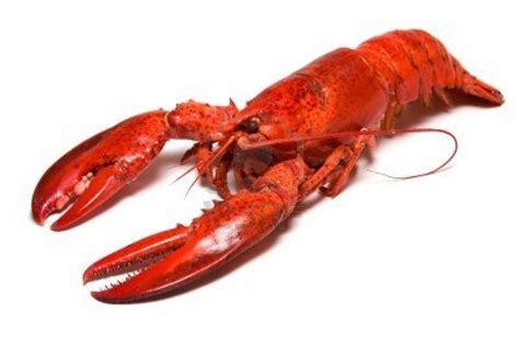 the lobster cure aging 5 immortal animals