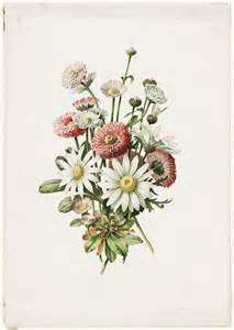 1920s Bathroom Decor 25 Best Botanical Illustration Ideas On Pinterest