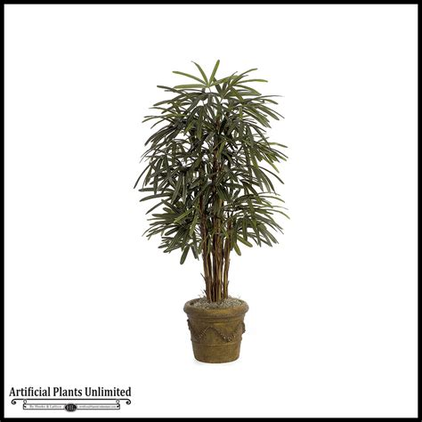 5 lady palm tree green indoor