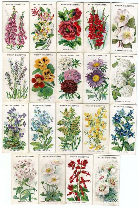 List Of Garden Flowers Names And Illustrations Of Traditional Cottage Garden Flowers Floral Design