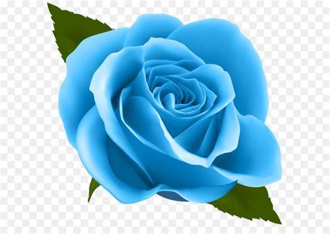 rose pink flower clip art blue rose png clip art image