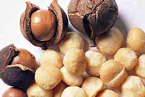 dogs macadamia nuts macadamia nut aspca