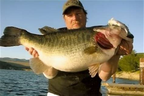 biggest bass boat in the world world s record largemouth bass general discussions