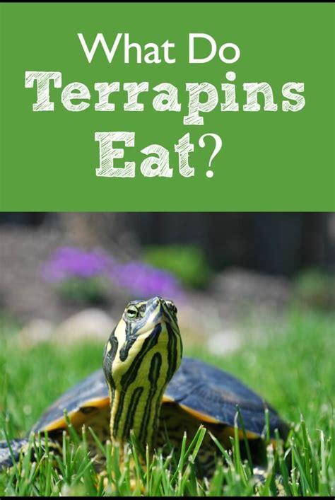 terrapins eat pbs pet travel