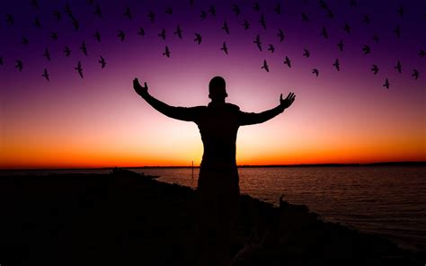 wallpaper exciting happy mood birds sunset silhouette