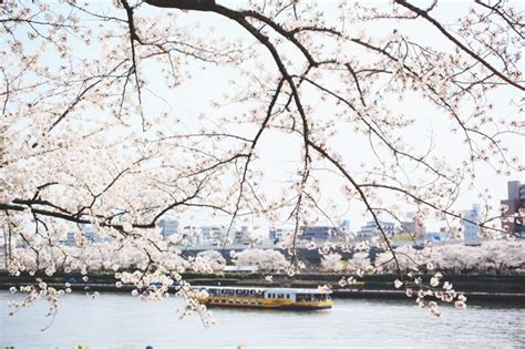 bateau mouche ou le prendre day 1 sumida park asakusa le monde de tokyobanhbao