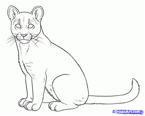 mountain lion coloring pages coloring home