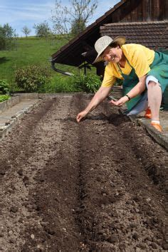 how to prepare soil for a vegetable garden 1000 images about growing vegetables on how