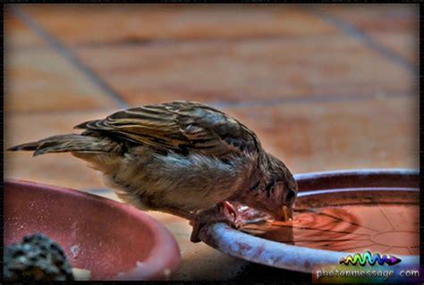 bird drinking biography