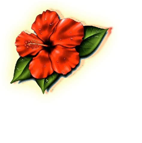 hawaii state flower images clipart best