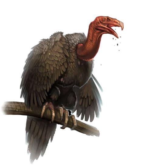 vulture fantasy pathfinder pinterest
