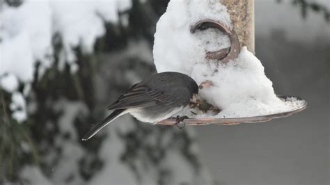 feeding the birds over the winter extravagant gardens