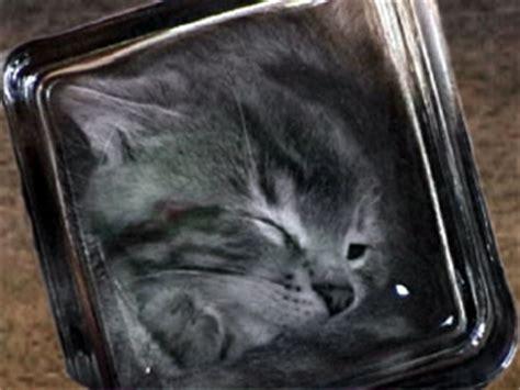 bonsai kitten human animal studies images cats cats cats