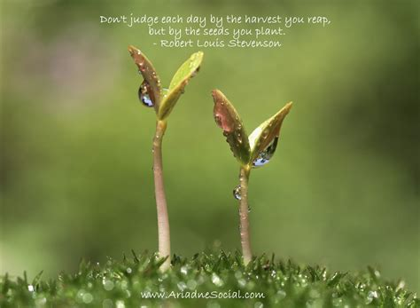 new year seeds planting seeds quotes for business quotesgram