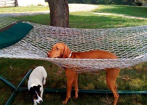 best chion lol photos 23 chiens qui ont fait un mauvais choix