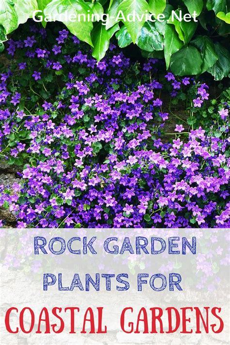 plants for a rock garden rock garden plants for the coastal garden