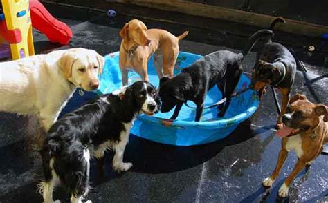 kiddie pool for dogs 12 summertime activities for you and your