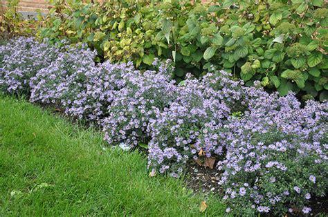 Botanical Gardens Maryland Wood S Blue Aster Flickr Photo