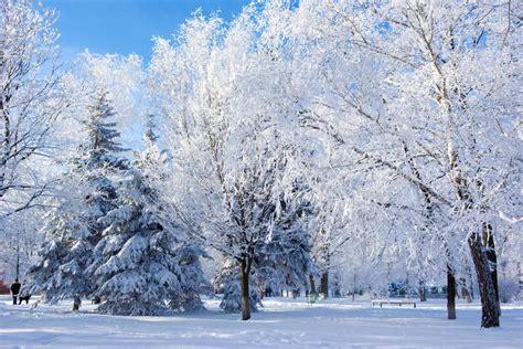 imagenes naturaleza invierno naturaleza del invierno imagen de archivo imagen de