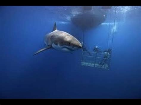 documental tiburones los ataques m s terror ficos del mundo 5 terror 237 ficos ataques de tibur 243 n a personas reales v