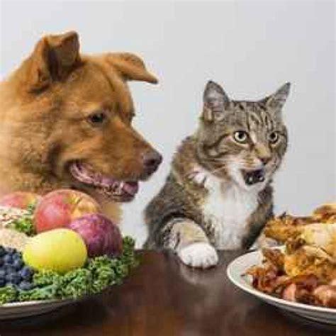 come alimentare un gatto animali alimentare correttamente il gatto seguendo le