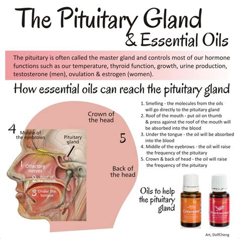 Pineal Gland Detox Side Effects best 25 pineal gland ideas on decalcify