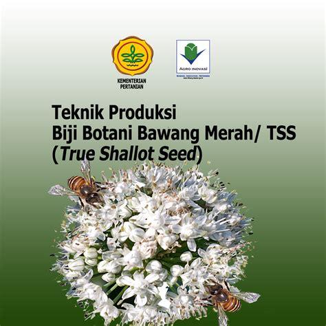 Benih Bawang Merah Thailand teknik produksi biji botani bawang merah tss