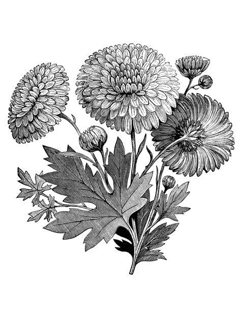 vintage flower garden clip art black  white flowers