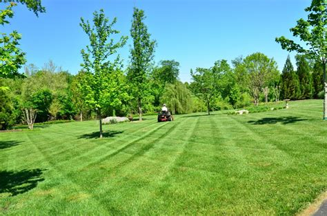 images tree grass structure lawn meadow