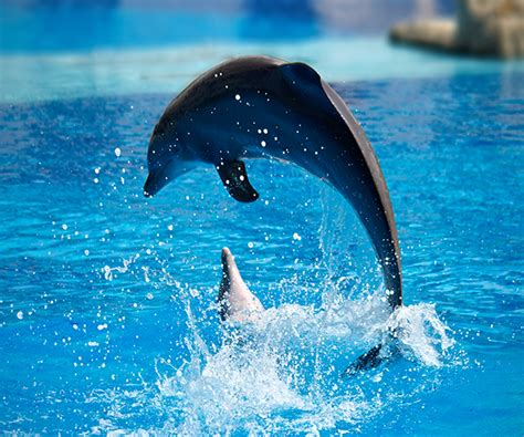 google images dolphins dolphin live wallpaper android apps on google play