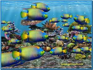 Fish aquarium 3d screensaver full version   Download free
