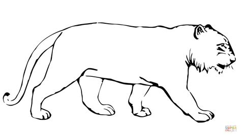 stripeless tiger coloring page tiger without stripes coloring page free printable