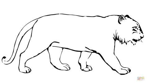 Coloriage Tigre Sans Rayures Coloriages 224 Imprimer