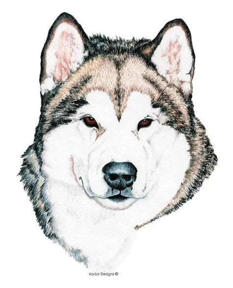 Alaskan Husky Drawing alaskan malamute drawing by sepulveda