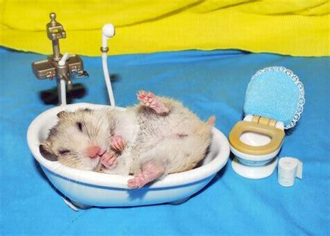 Cute Kids Bathrooms - hamster bathroom 1funny com