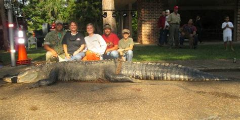outdoor alabama boating license alligator hunting season in alabama outdoor alabama