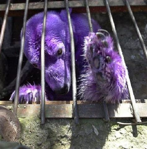 grape friends 10 amazing purple animals webecoist